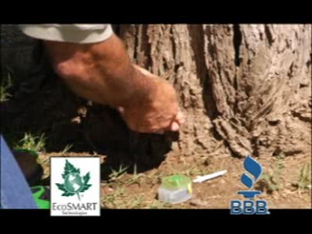 Angelo Tree Experts_ Saving Trees_1295545792276482427