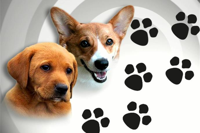 CV Live Chats with Concho Valley Paws_5773246233247631355
