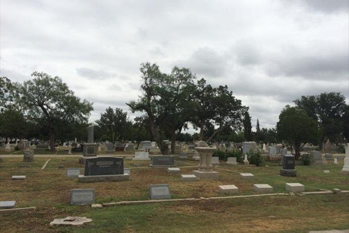 Fairmount Cemetery tree_-3220162395050194691