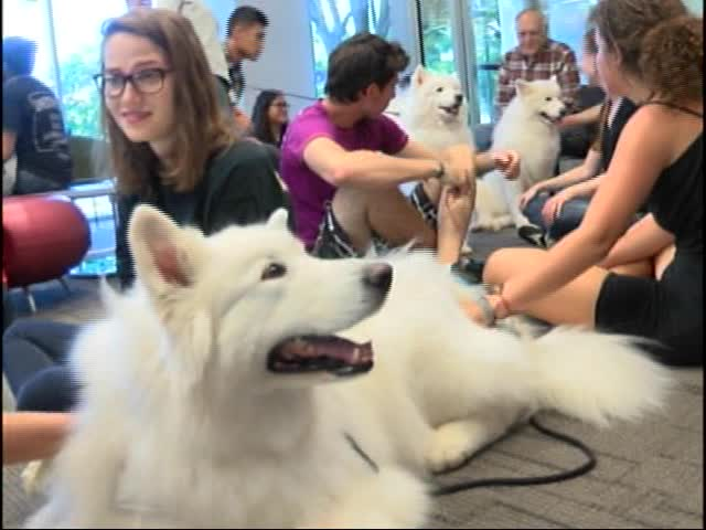 -Paws- and De-Stress Dog Therapy Sessions at ASU Library_51384573-159532