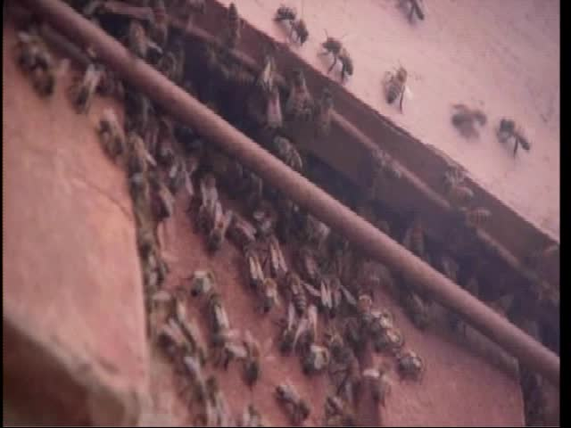 07-29-16 50 thousand bees removed from home_98546895-159532