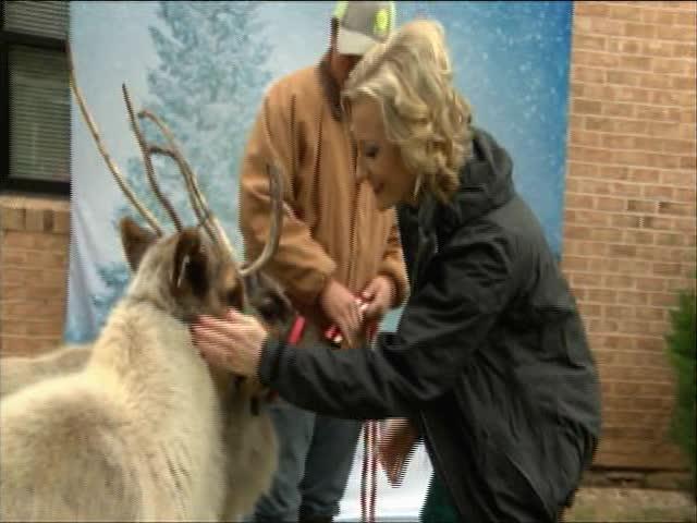 Reindeer in San Angelo_90894631-159532