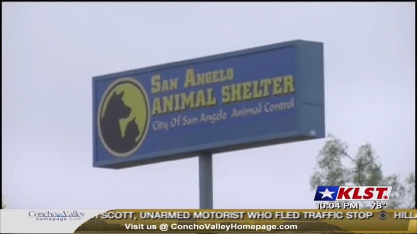 Distemper Outbreak at Animal Shelter_45631412