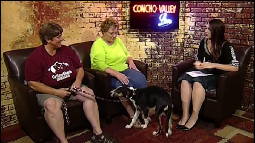 082517 Critter Shack Rescue- CV Live_57642712