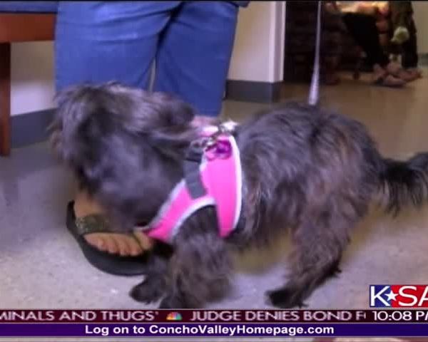 Clear the Shelter- KSAN-s Pet of the Day_23829317