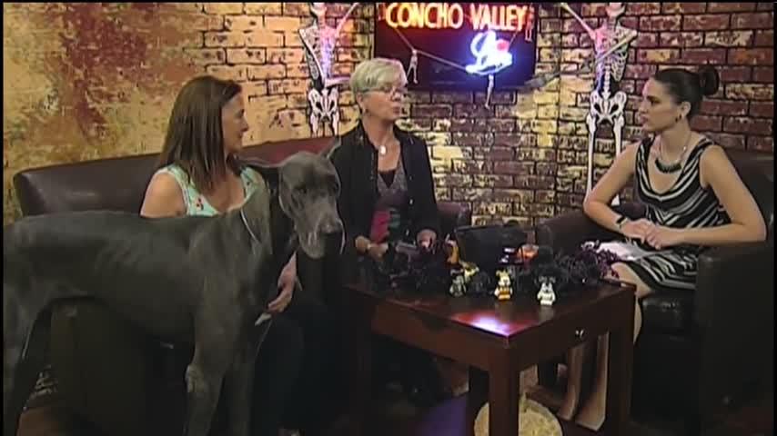 103017 AKC Dog Show- CV Live_46219364