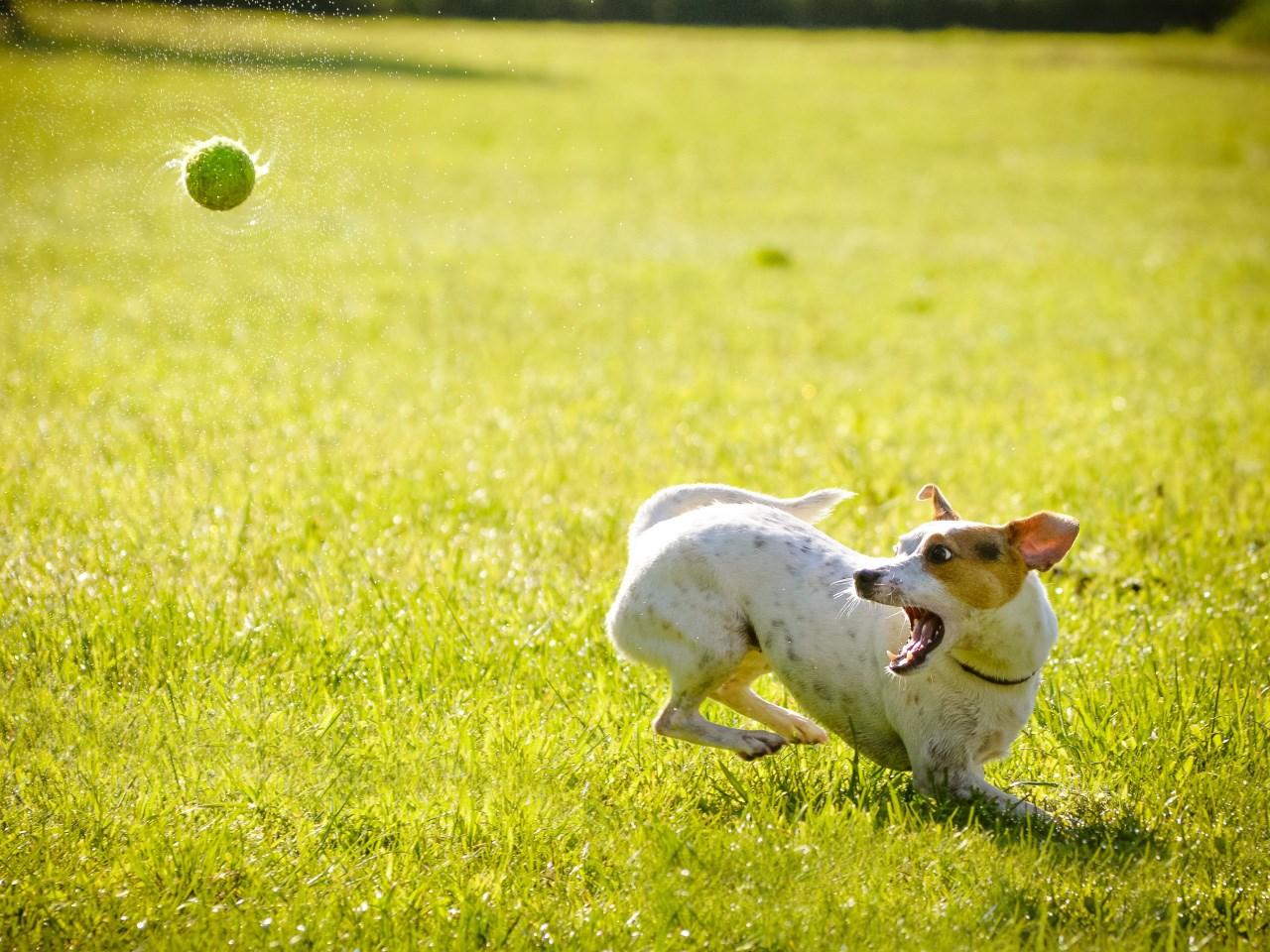 dog park_1531932328720.jpg.jpg