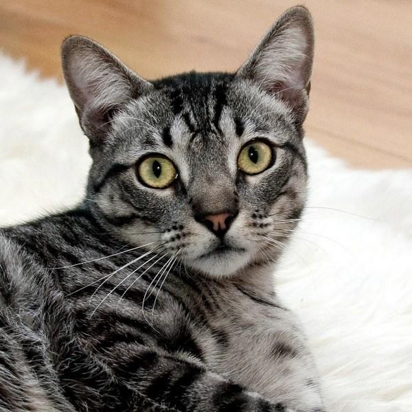 Cat_Picture.jpg