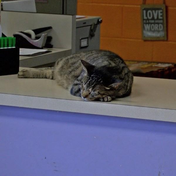 Concho Valley Cat Nap