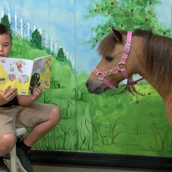 Hooves_and_Books_0_20190603213902